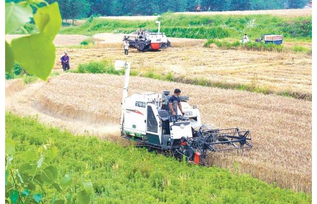 随州市今夏小麦收割已全面铺开